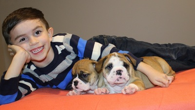 French Bulldog Puppies For Sale English Bulldog Puppies For Sale New Jersey New York